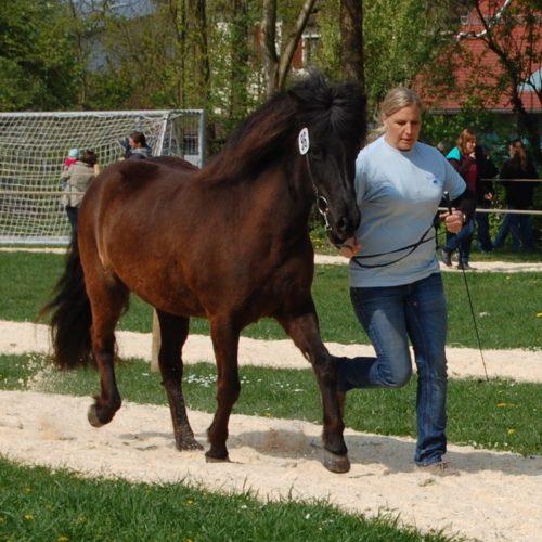 Hrafntinna beim Pferdemarkt